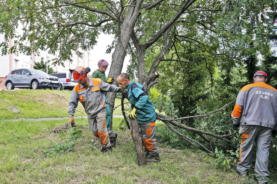 Víchrica zničila 900 stromov.
