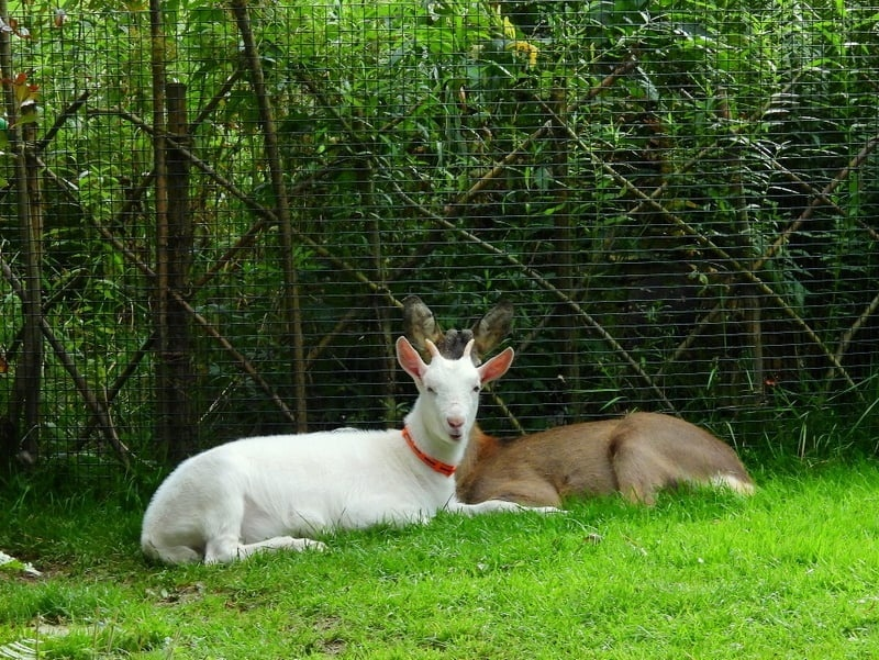 Zvierací kamaráti zo záchrannej stanice.