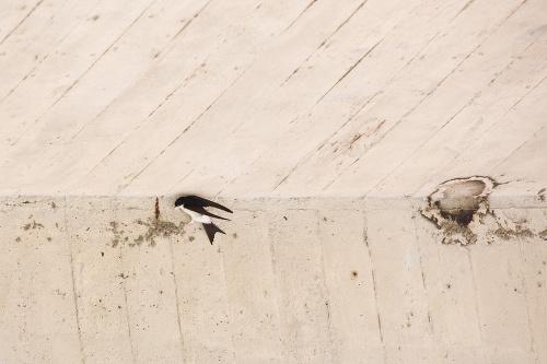 Belorítkam zničili hniezda.