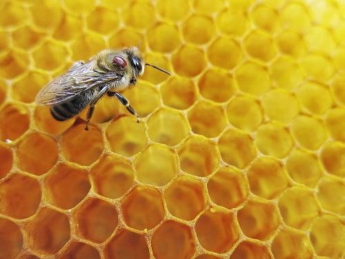 Klieštik včelí.
