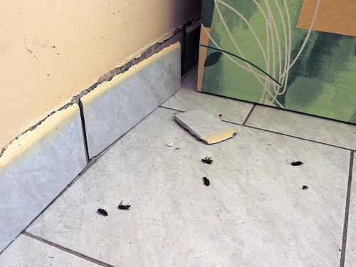 Chrobáky vyliezali z otvorov