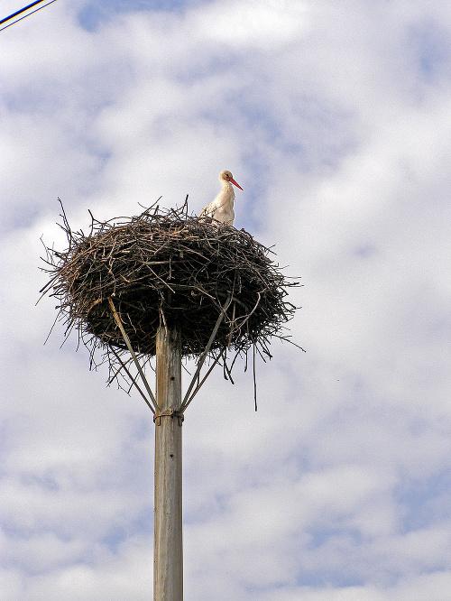 Rozmery starého hniezda.