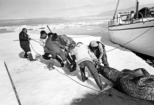 Lovci: V zamrznutej zemi