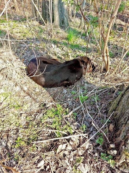 Psíkov našli v chotári