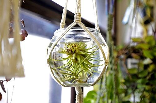 Viaceré zanedbané rastlinky idú