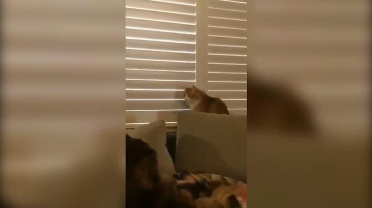 Prefíkaná mačka sa nenechá len tak prekabátiť: Rázne svojmu pánovi ukázala, kto je doma šéf