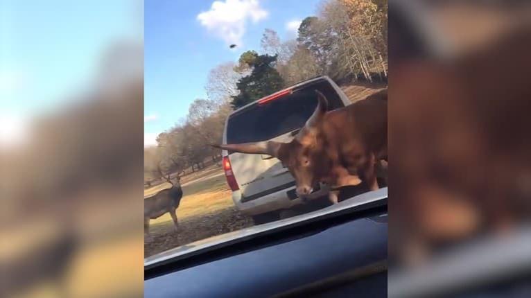 V Texase nastolili nový režim: Odteraz vodičov kontrolujú už aj zvieratá