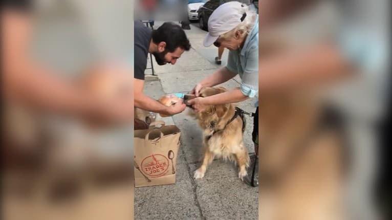 Jedla sa len tak nevzdá: Pes sa zahryzol do burgeru okoloidúceho človeka, aj majiteľ bol v koncoch