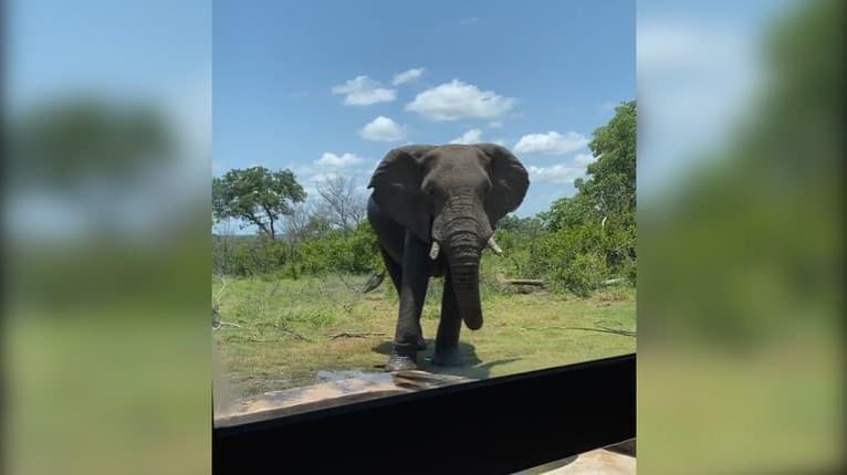 Slon privítal návštevníkov radostným, ale nečakaným gestom: Keď to uvidíte, budete sa smiať