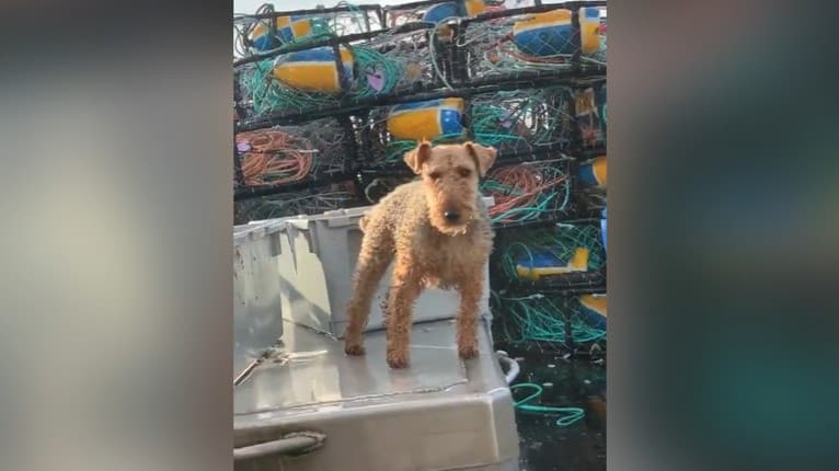 Psa zobrali na rybársku loď, more mu dáva poriadne zabrať: Pozrite, ako sa vyrovnáva s vlnami