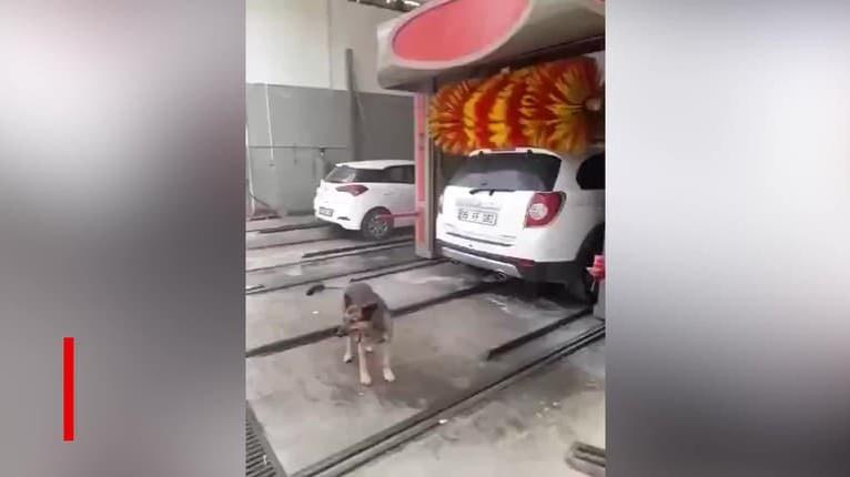 Autoumyváreň na dve využitia: Rozkošný túlavý pes tam chodí pravidelne, toto je dôvod