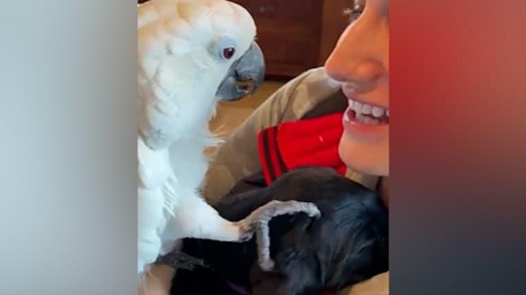 Rozkošný moment privítania nového maznáčika: Papagáj vyznal šteniatku lásku