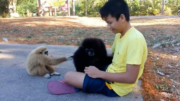 Žiarlivosť aj v ríši zvierat: Opičke chýbalo objatie, aha, čo začala vyvádzať