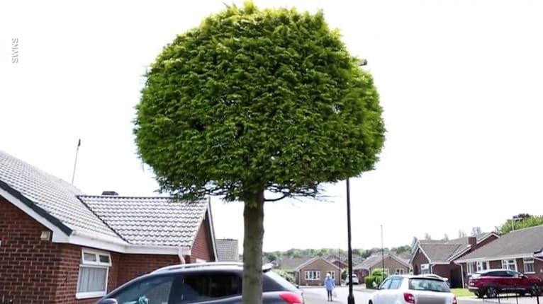 Aj takto môžu dopadnúť susedské spory: Neuveríte, čo spravil sused so stromom, ktorý zasahoval na jeho pozemok