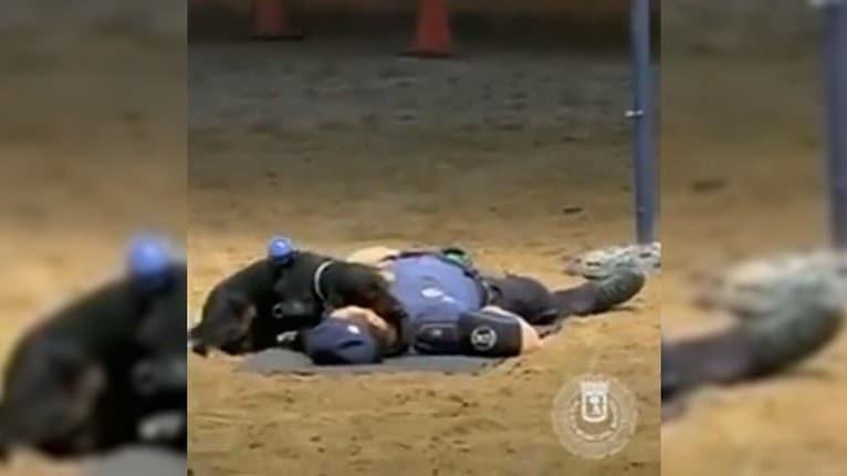 Neuveriteľné! Pes madridskej polície dokáže resuscitovať človeka: Pozrite, ako kontroluje, či dýcha