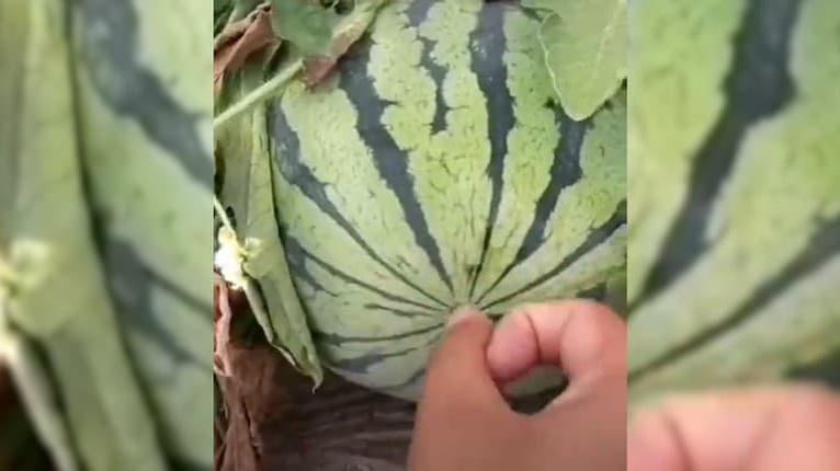 Skvelý trik, ako zistiť, či je melón už zrelý: V obchode to ale nerobte
