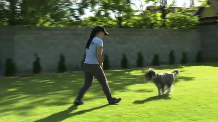 Kričíte vonku na vášho psíka zbytočne? Vyskúšajte dva tipy inštruktora, ako ho privolať
