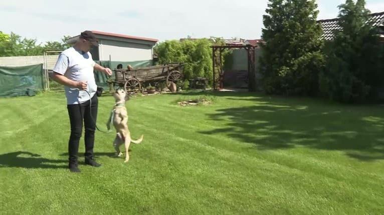 Využite karanténu na výcvik vášho psíka: Relácia Miláčikovo vám ukáže, ako na to