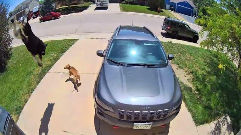 Rozbehli sa za dobrodružstvom: Dvaja psi vyskočili z okna druhého poschodia