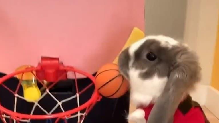 Bini je lepší basketbalista ako mnohí profesionáli: Obdivuhodné, čo dokáže rozkošný králik
