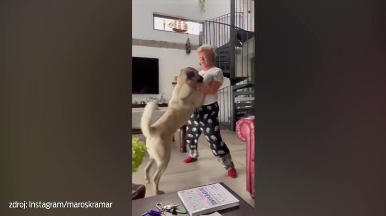 Pes Maroša Kramára sa šiel zblázniť od šťastia: Sledujte, čo s ním známy herec stvára