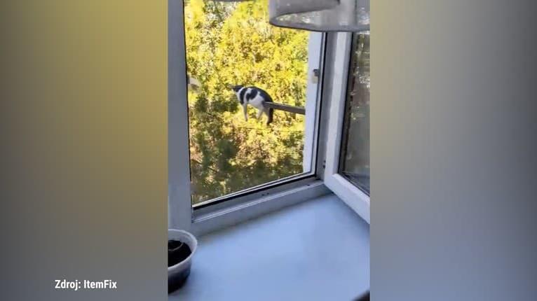 Ako jej to napadlo? Mačka si na oddych vybrala dosť nebezpečné miesto