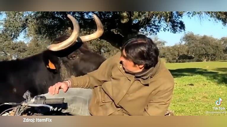 Muž chcel odniesť teliatko, do hry však vstúpil odvážny býk: Situácia nabrala rýchly spád!