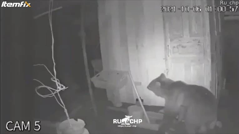 Bezpečnostná kamera zachytila medveďa: Aha, kam si to v noci namieril