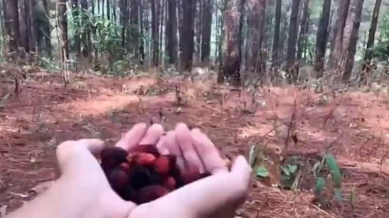 Muž išiel do lesa nakŕmiť kozičku, netušil, čo uvidí: Tento pohľad vám zovrie srdce